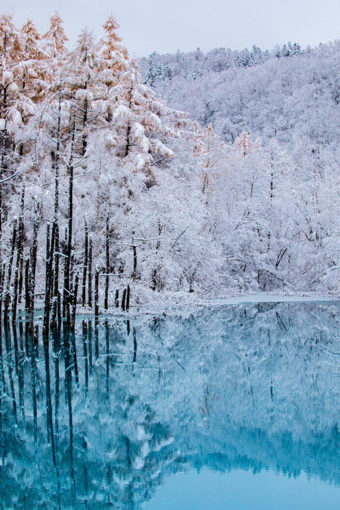 青い池,美瑛,初雪,絶景,学び,期間限定,リフレクション